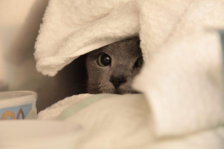 ネコの病気|目
